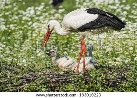 Stork with baby puppy in its nest on the daisy background - stock photo