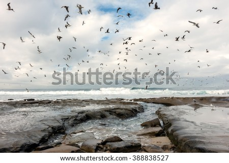Storm clouds and flock of seagulls flying over wet rocky shoreline, breaking waves. Soft subdued lighting from cloudy sky.  - stock photo