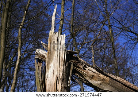 Storm damage closeup. Fallen tree in a Danish forest after a storm.Forest sky blue background. - stock photo
