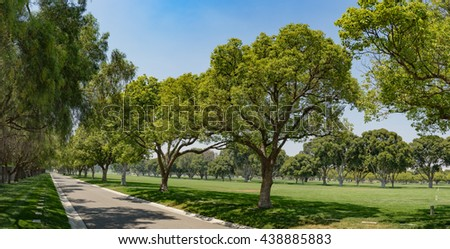 Straight lane lined with green grass and tall leafy trees. - stock photo