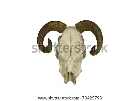 Strange horned skull isolated on white - stock photo