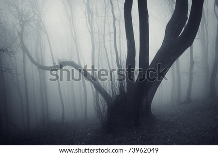 strange looking tree in a dark forest with fog - stock photo