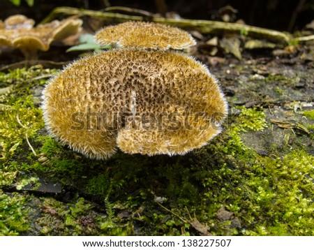Strange Rainforest Mushroom - stock photo