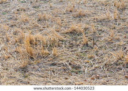 Straw after harvest at farm in thailand - stock photo