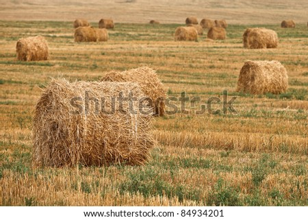 Straw bales on field - stock photo