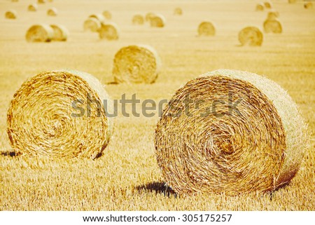Straw bales on the field after harvest. - stock photo
