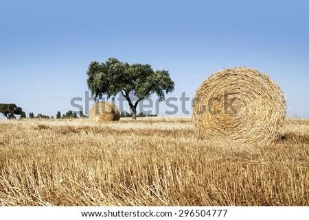Straw roll in Alentejo, Portugal - stock photo