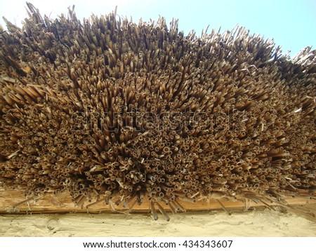 straw texture/background - stock photo