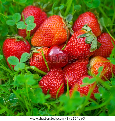 strawberries and cherry lying on green grass - stock photo