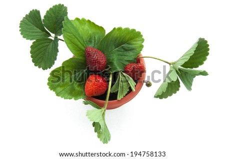 strawberries in a pot - stock photo
