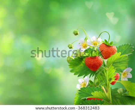 strawberries in shape of a heart  - stock photo
