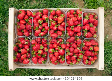 Strawberries into a wood box - stock photo
