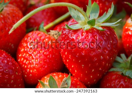 strawberries on basket - stock photo