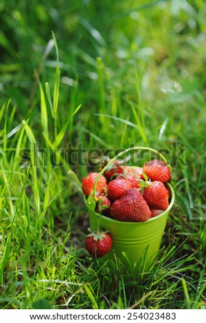 Strawberry bucket placed on the grass - stock photo
