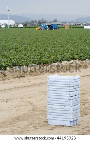 strawberry field with workers and baskets - stock photo
