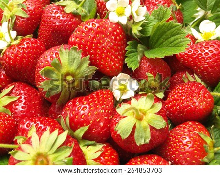 Strawberry fruit        - stock photo