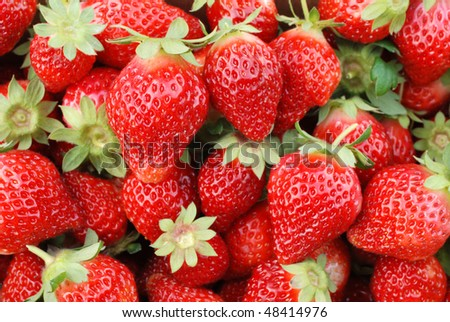 strawberry fruit. - stock photo