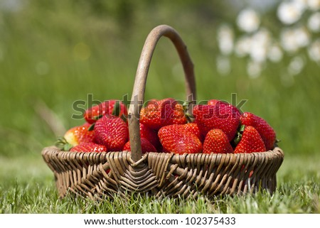 Strawberry in a basket on a grass - stock photo