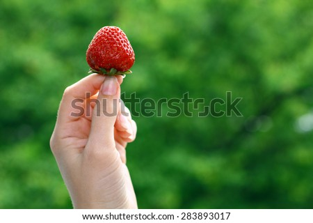 Strawberry in hand on nature background - stock photo