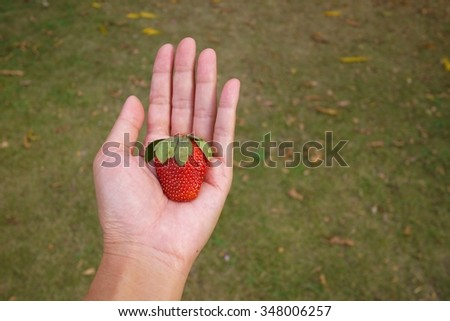 Strawberry  on hand , Selective focus . - stock photo