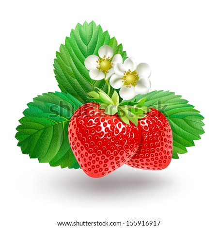 Strawberry with leaves and flowers.  - stock photo