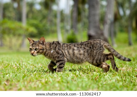 Stray cat in the Philippines walking quickly through the long grass of a resort - stock photo