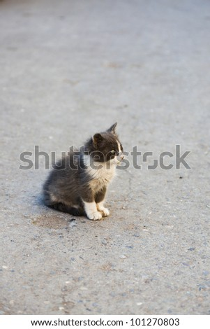 stray cat in the streets of Marrakesh - stock photo