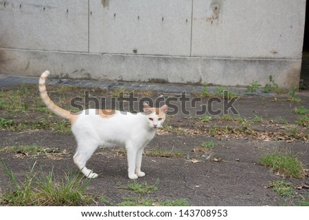Stray cat in white and yellow spot color look at you. - stock photo