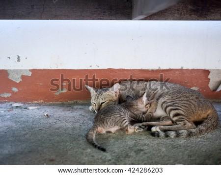 Stray cat nursing their young kitten  - stock photo