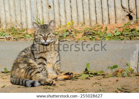 Stray cat on the ground, looking at the camera - stock photo