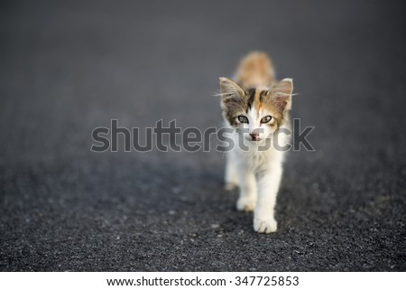 stray cat on the road. depth of field and selected focus - stock photo