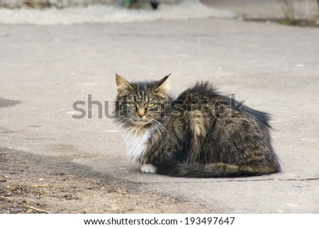 Stray cat portrait - stock photo