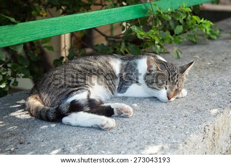 stray cat sleeping on the street - stock photo