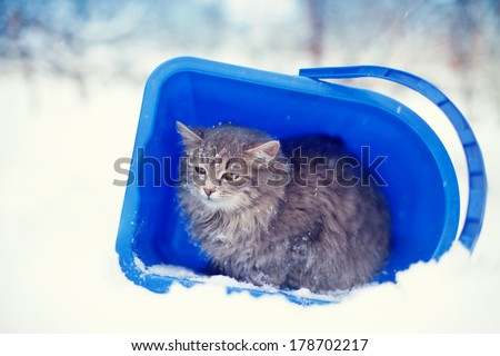 Stray cat taking cover from snowstorm in a bucket - stock photo