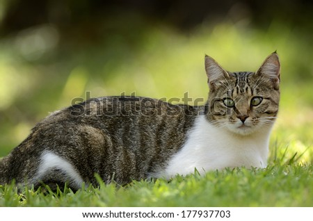 Stray Cat with a squint eye - stock photo