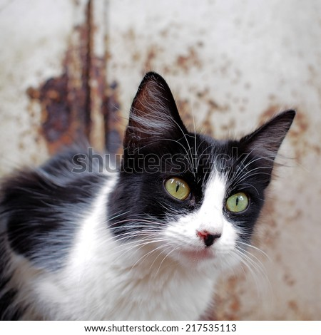 Stray cats photographed in Guanajuato, Mexico. - stock photo