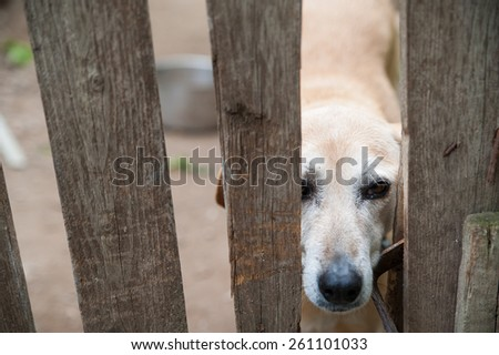 Stray dog behind the corral of a dog refuge - stock photo
