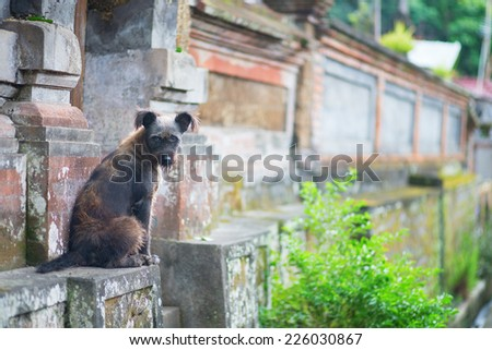 Stray dog on a street of Ubud, Bali, Indonesia - stock photo