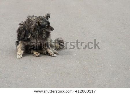 Stray dog on the street - stock photo