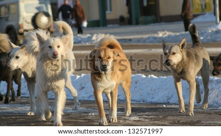 Stray dog pack - stock photo
