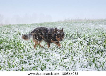 Stray dog walking on the grass cowered with snow - stock photo