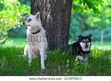 Stray dogs in the city park - stock photo