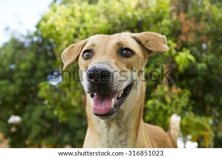 Stray dogs its tongue hanging out and doing pretty face - stock photo