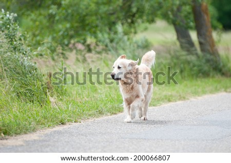straying dog on the roadside - stock photo