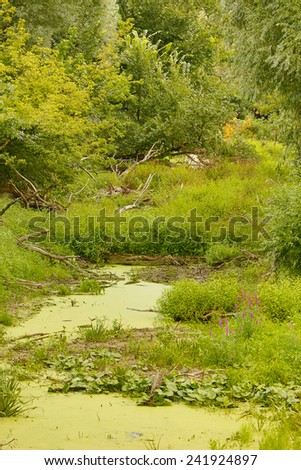Stream bed - stock photo
