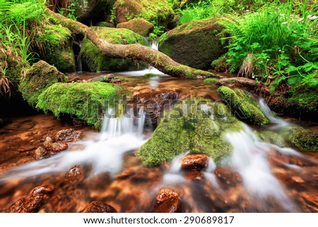 Stream gently cascading down a mountain forest, with small waterfalls in the foreground and fresh green fern in the background - stock photo