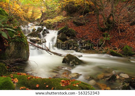 Stream in a autumnal beech forest, Asturias. Spain. - stock photo