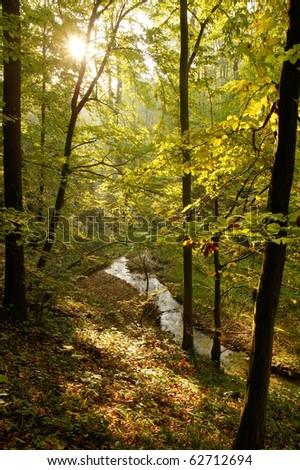 Stream in the autumn woods - stock photo