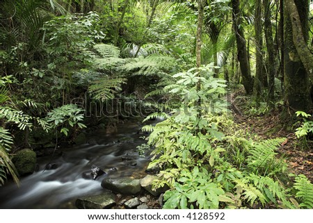 Stream inside lush forest - stock photo