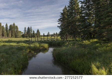 Stream of water a field, Riding Mountain National Park, Manitoba, Canada - stock photo